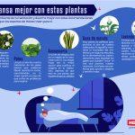 Cuida plantas y duerme mejor